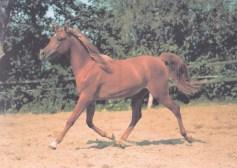 Konji_0014