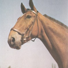 Konji_0015