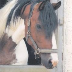 Konji_0016