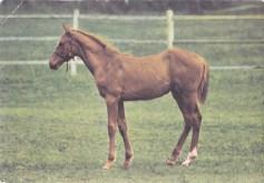 Konji_0025
