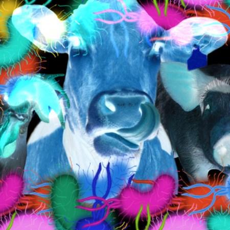 Živali, Fotomontaža in fotomanipulacija: Tanja Jerebic