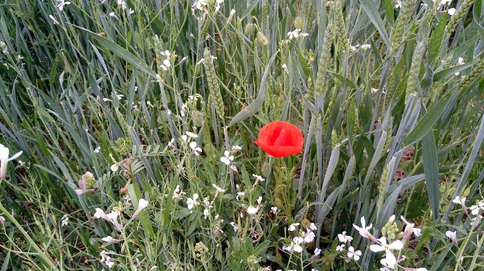 Rož'ca, Foto: Tanja Jerebic