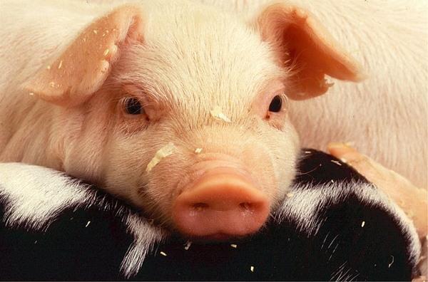 Homöopathie statt Antibiotika: Studie zeigt Wirksamkeit mit 6x weniger Durchfall-Erkrankungen / Trendsetter Landwirtschaft