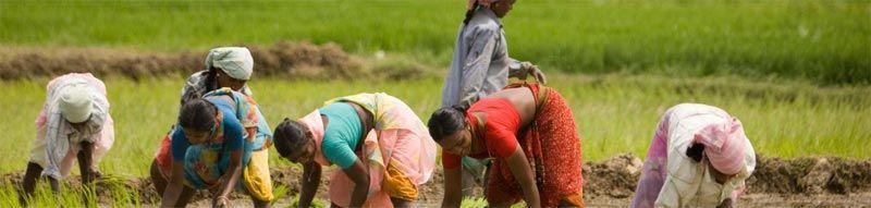 Desarrollo rural en la India Rural