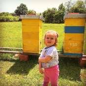 Iva na pčelinjaku