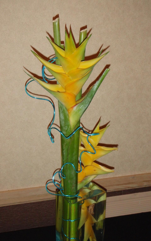 Underwater Design Examples  Homosassa River Garden Club