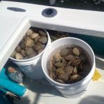 10 Gallon Scallop limit with Homosassa Scalloping Charters