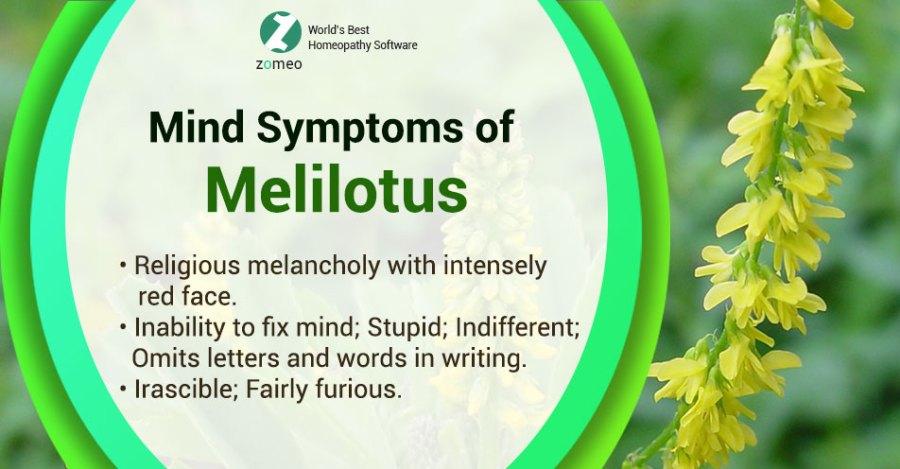 Melilotus
