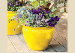 34 Lovely Combination Planting Container Gardening Ideas