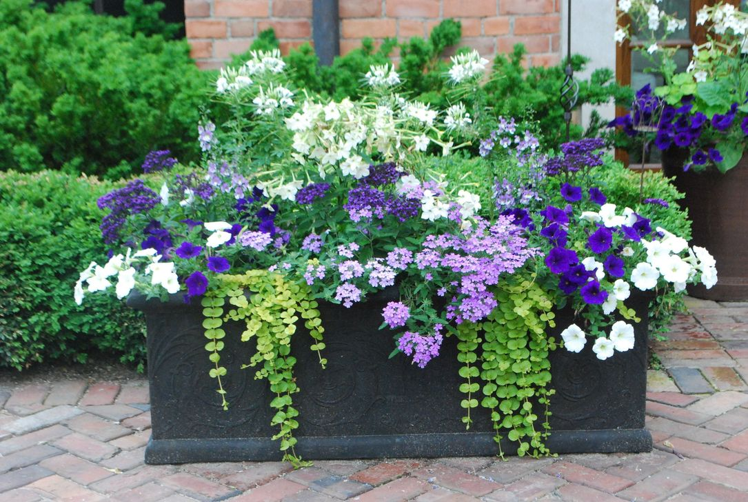 Lovely Combination Planting Container Gardening Ideas 02