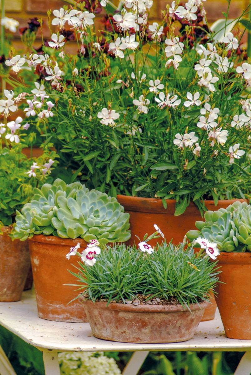 Lovely Combination Planting Container Gardening Ideas 22