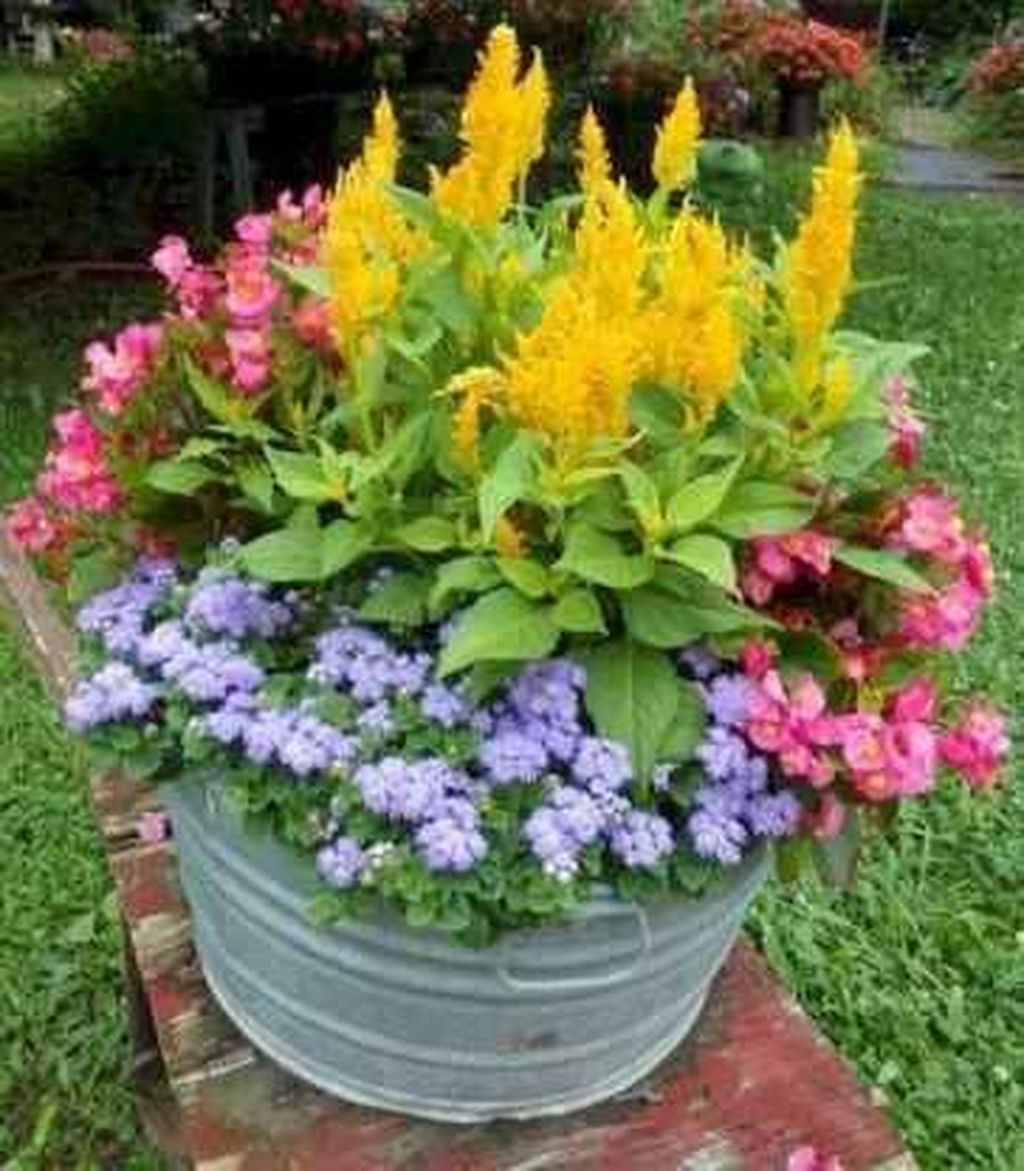 Lovely Combination Planting Container Gardening Ideas 31