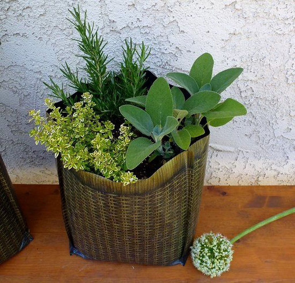 Lovely Combination Planting Container Gardening Ideas 33