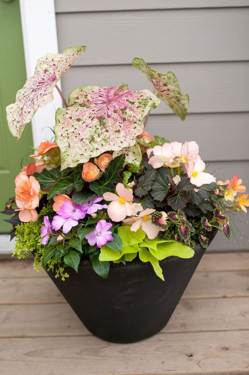 Lovely Combination Planting Container Gardening Ideas 34