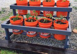 5 Gallon Bucket Garden Ideas