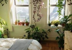Bedroom Plant Ideas