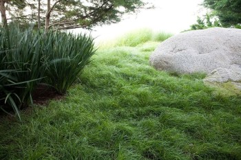 Perfect Green Grass Design Ideas For Front Yard Garden 28