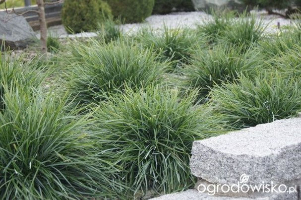 Perfect Green Grass Design Ideas For Front Yard Garden 36