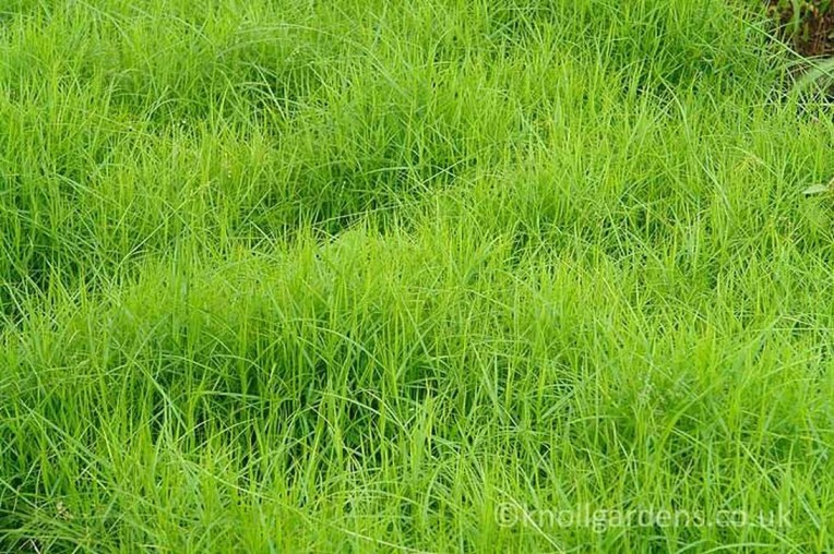 Perfect Green Grass Design Ideas For Front Yard Garden 50