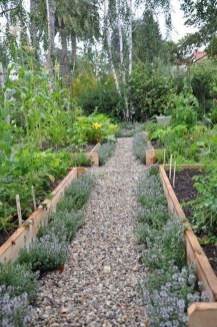 Exciting Ideas To Grow Veggies In Your Garden 21
