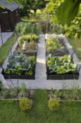 Exciting Ideas To Grow Veggies In Your Garden 22