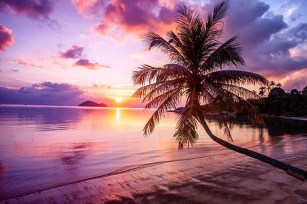 Best Ideas Of Tropical Wall Mural For Summer 53