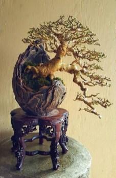 Inspiring Bonsai Tree Ideas For Your Garden 06