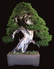Inspiring Bonsai Tree Ideas For Your Garden 12