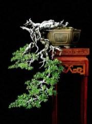 Inspiring Bonsai Tree Ideas For Your Garden 14