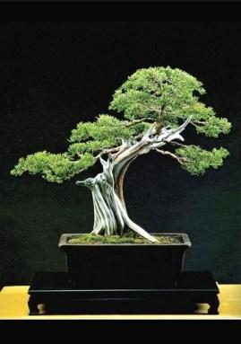 Inspiring Bonsai Tree Ideas For Your Garden 16
