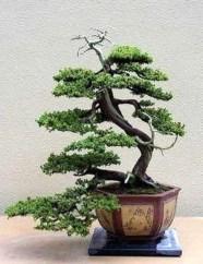 Inspiring Bonsai Tree Ideas For Your Garden 18
