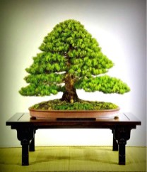 Inspiring Bonsai Tree Ideas For Your Garden 20