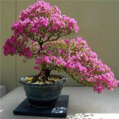 Inspiring Bonsai Tree Ideas For Your Garden 21