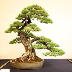 Inspiring Bonsai Tree Ideas For Your Garden 22