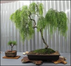 Inspiring Bonsai Tree Ideas For Your Garden 26
