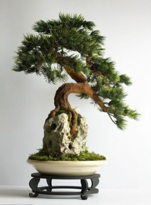 Inspiring Bonsai Tree Ideas For Your Garden 30