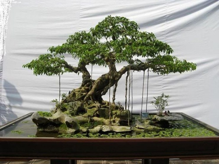 Inspiring Bonsai Tree Ideas For Your Garden 33