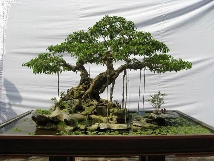 Inspiring Bonsai Tree Ideas For Your Garden 33