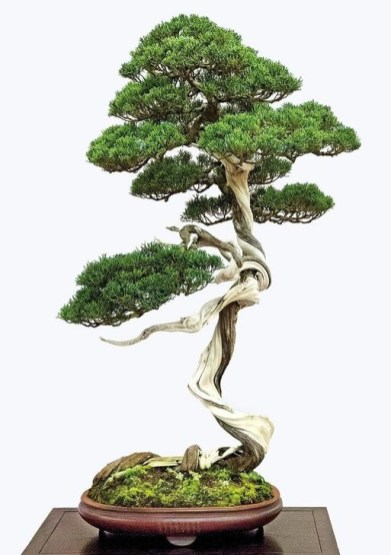 Inspiring Bonsai Tree Ideas For Your Garden 34
