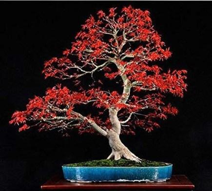 Inspiring Bonsai Tree Ideas For Your Garden 40
