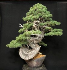 Inspiring Bonsai Tree Ideas For Your Garden 44