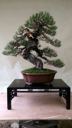 Inspiring Bonsai Tree Ideas For Your Garden 47