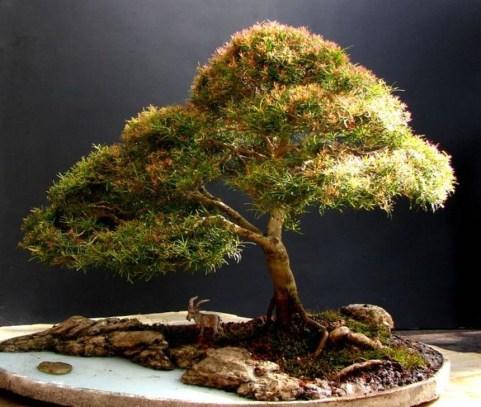Inspiring Bonsai Tree Ideas For Your Garden 49