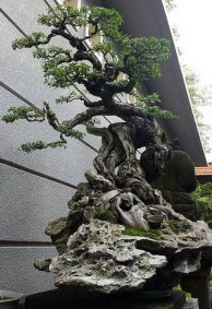 Inspiring Bonsai Tree Ideas For Your Garden 53