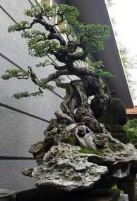 Inspiring Bonsai Tree Ideas For Your Garden 53