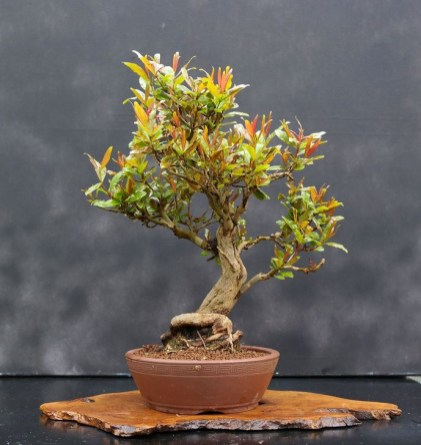 Inspiring Bonsai Tree Ideas For Your Garden 55