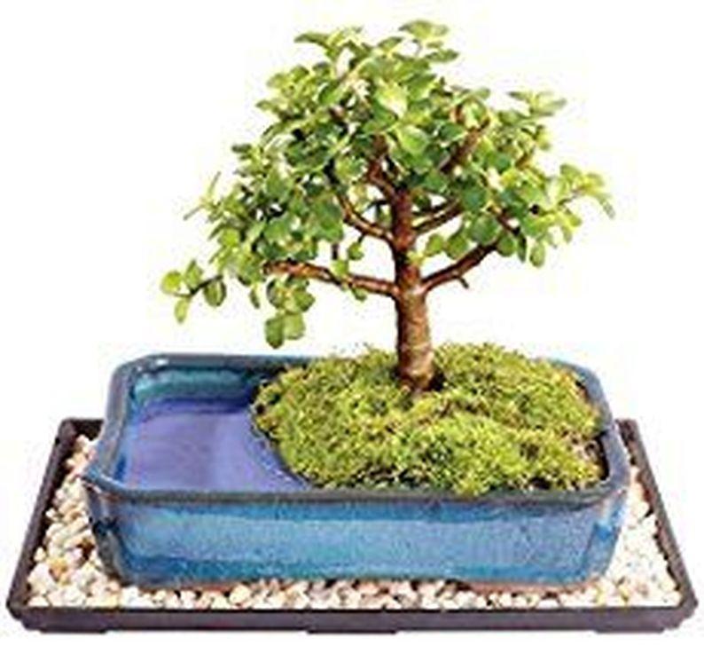 Inspiring Bonsai Tree Ideas For Your Garden 60