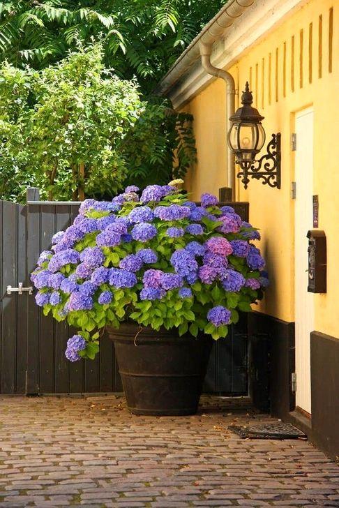 Creative Front Door Flowers Pot Ideas 40