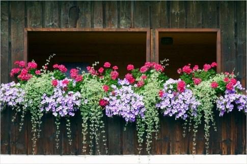 Wonderful Window Box Planters Yo Beautify Up Your Home 39