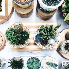 Cool Small Cactus Ideas For Home Decoration 02